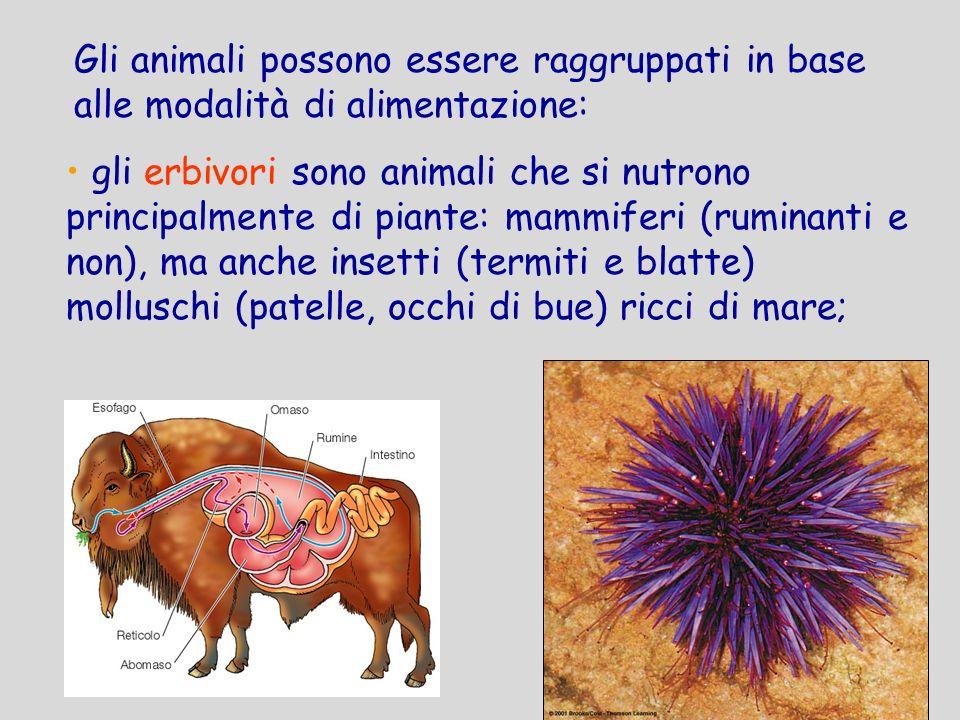 Gli animali possono essere raggruppati in base alle modalità di alimentazione: