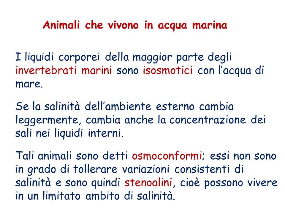 Animali che vivono in acqua marina