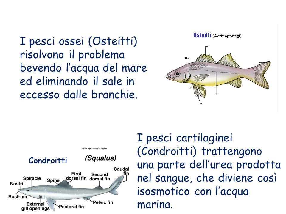 I pesci ossei (Osteitti) risolvono il problema bevendo l'acqua del mare ed eliminando il sale in eccesso dalle branchie.