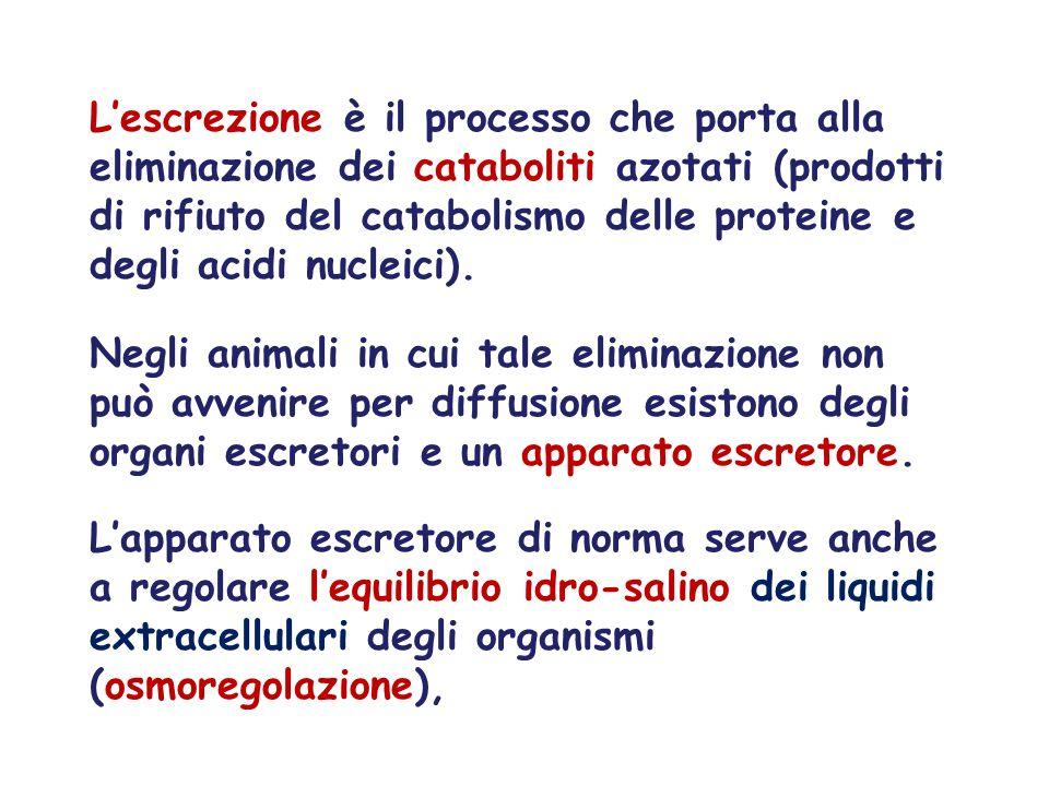 L'escrezione è il processo che porta alla eliminazione dei cataboliti azotati (prodotti di rifiuto del catabolismo delle proteine e degli acidi nucleici).