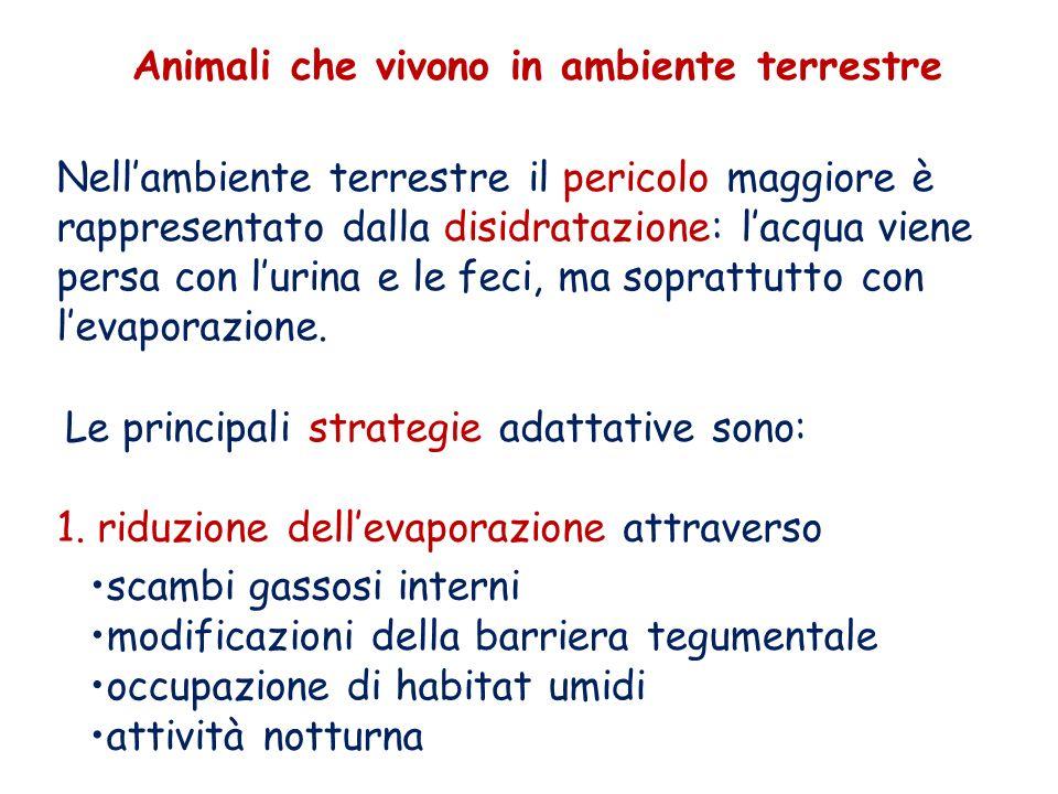 Animali che vivono in ambiente terrestre