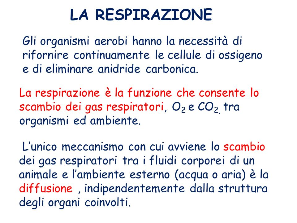 LA RESPIRAZIONE Gli organismi aerobi hanno la necessità di rifornire continuamente le cellule di ossigeno e di eliminare anidride carbonica.