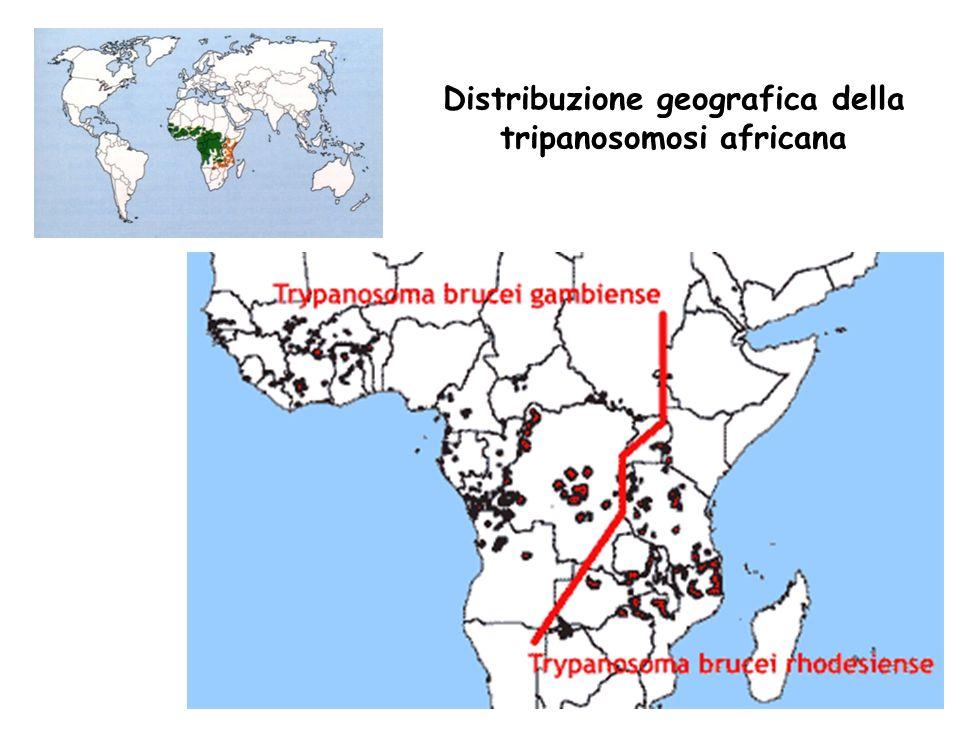 Distribuzione geografica della tripanosomosi africana
