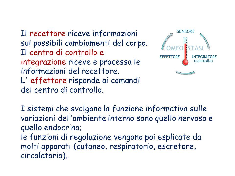 Il recettore riceve informazioni sui possibili cambiamenti del corpo