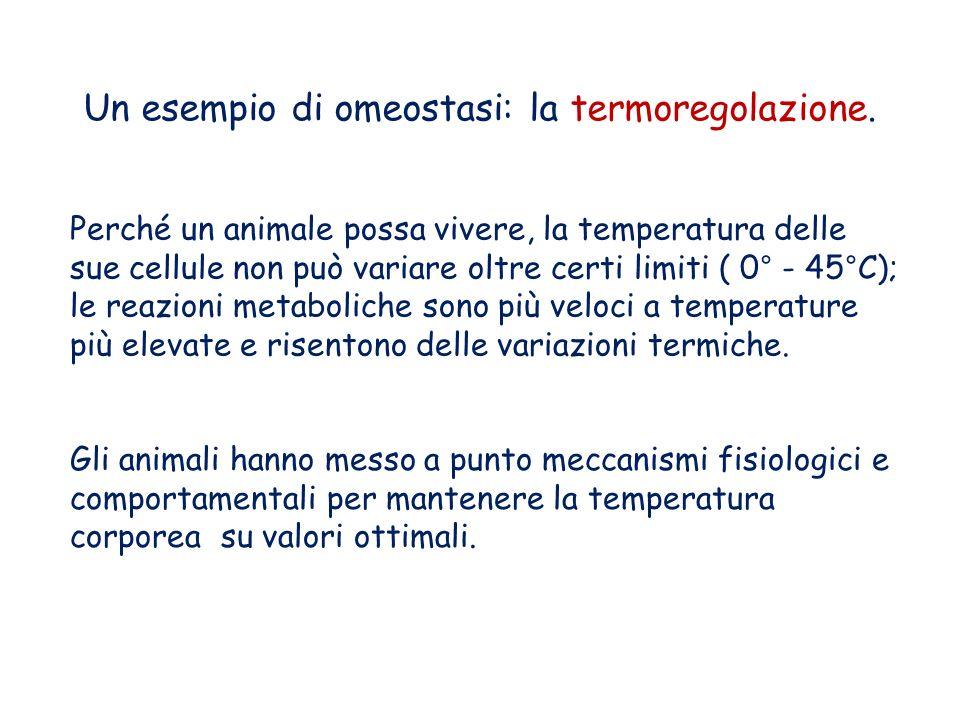 Un esempio di omeostasi: la termoregolazione.