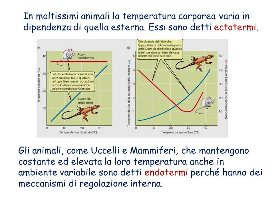 In moltissimi animali la temperatura corporea varia in