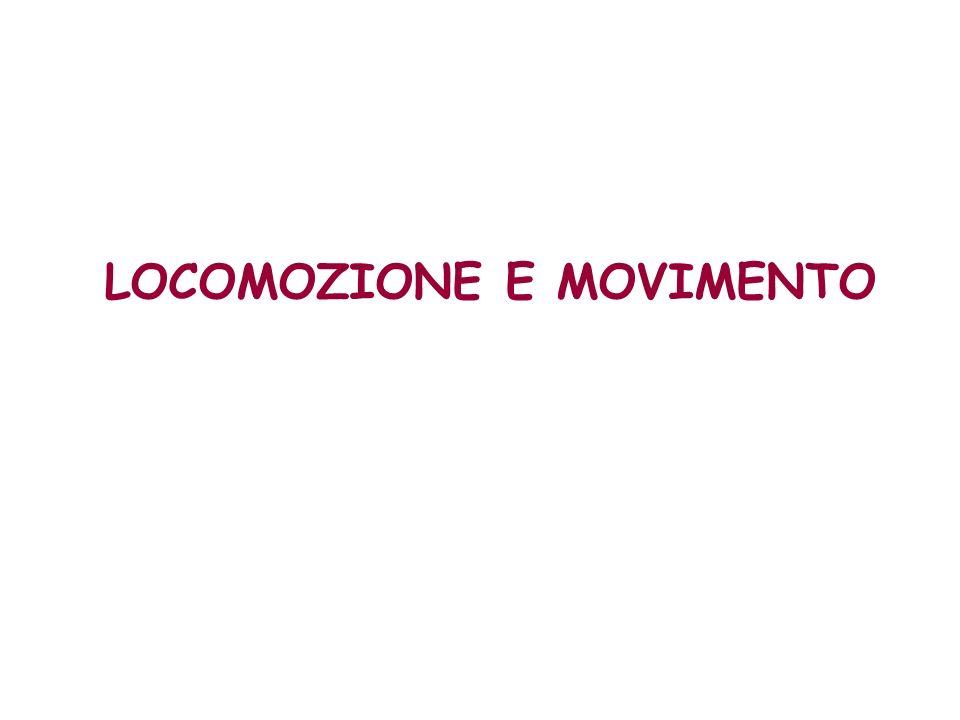 LOCOMOZIONE E MOVIMENTO