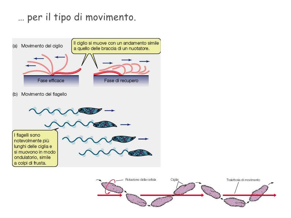 … per il tipo di movimento.