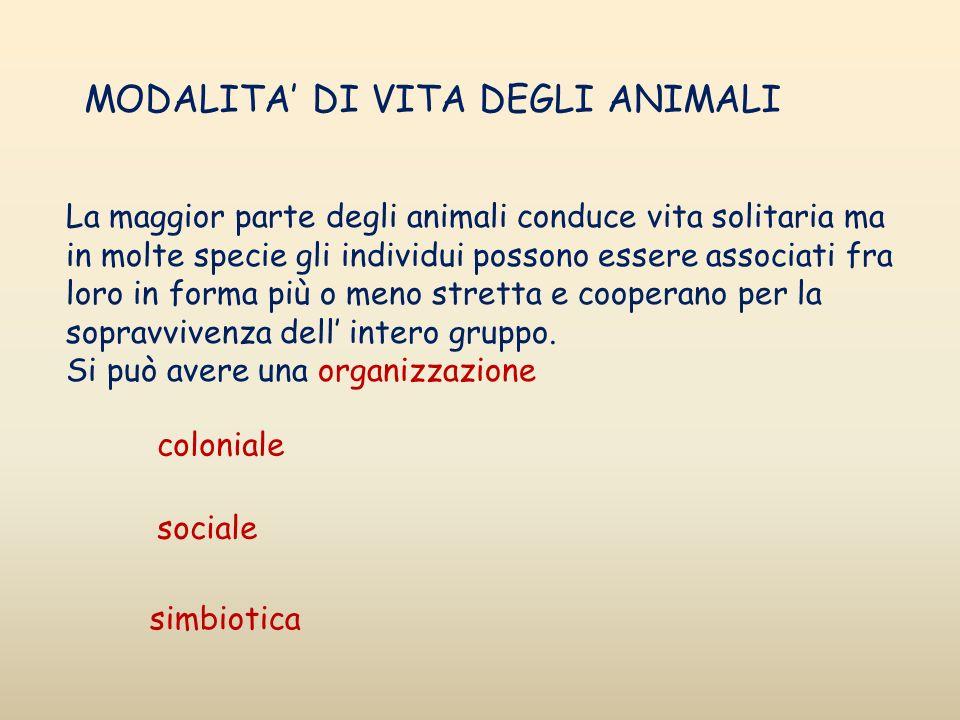 MODALITA' DI VITA DEGLI ANIMALI