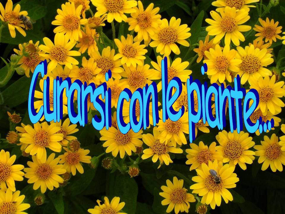 Curarsi con le piante...