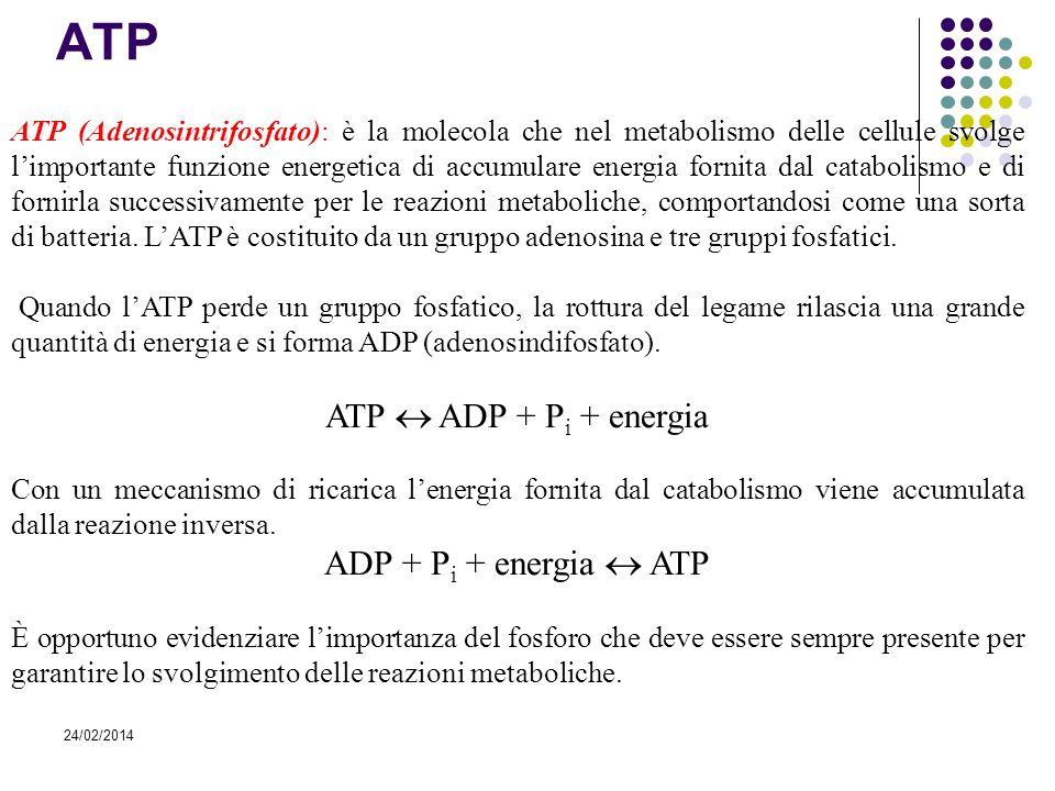 ATP ATP  ADP + Pi + energia ADP + Pi + energia  ATP