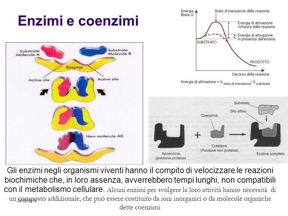 Enzimi e coenzimi