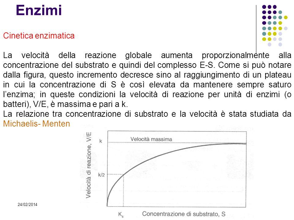 Enzimi Cinetica enzimatica