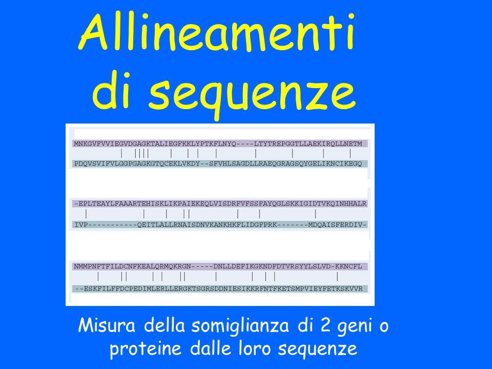 Allineamenti di sequenze Misura della somiglianza di 2 geni o