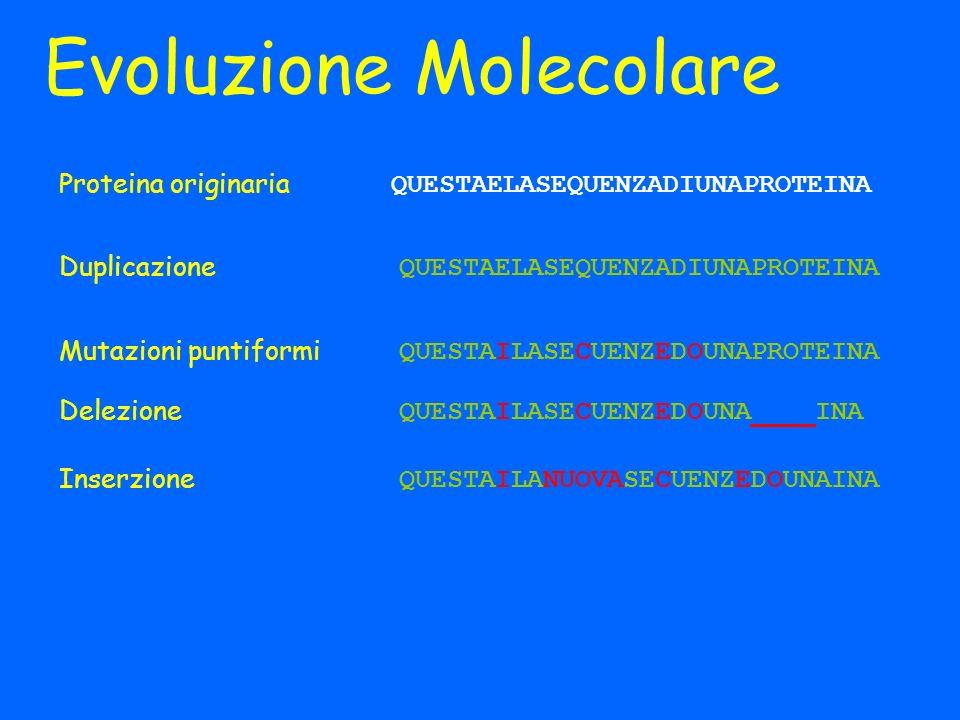 Evoluzione Molecolare