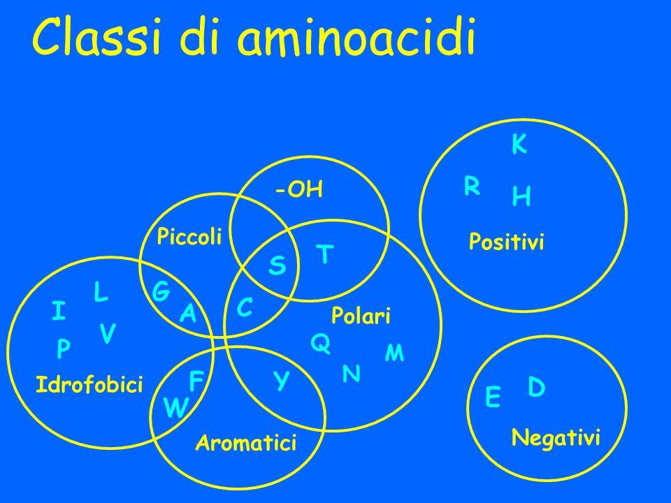 Classi di aminoacidi K R H T S L G I C A V P F Y D E W -OH Piccoli