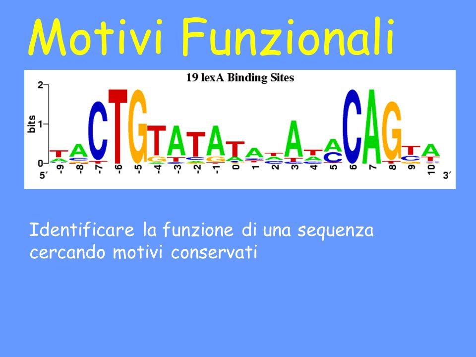 Motivi Funzionali Identificare la funzione di una sequenza