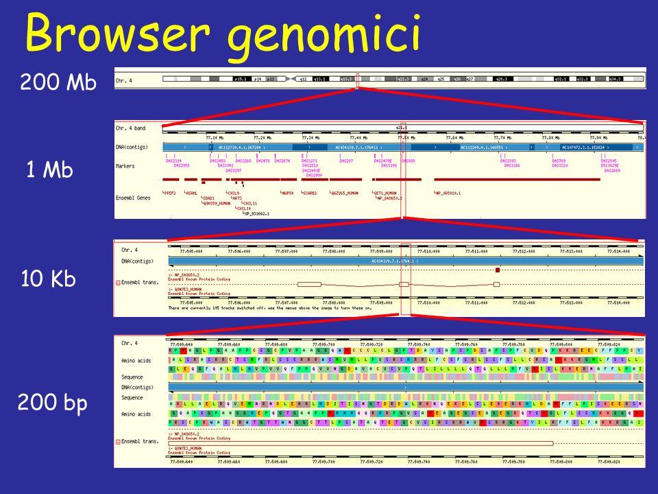 Browser genomici 200 Mb 1 Mb 10 Kb 200 bp