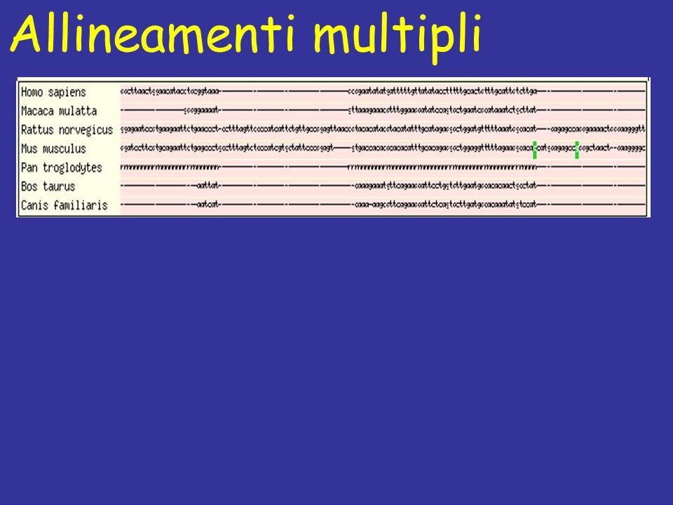 Allineamenti multipli