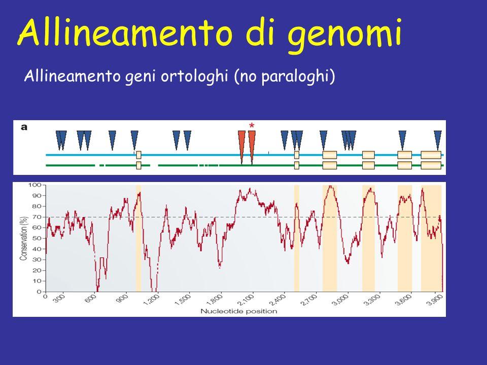 Allineamento di genomi