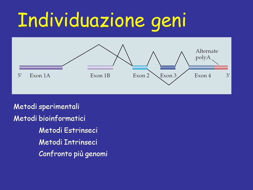 Individuazione geni Metodi sperimentali Metodi bioinformatici