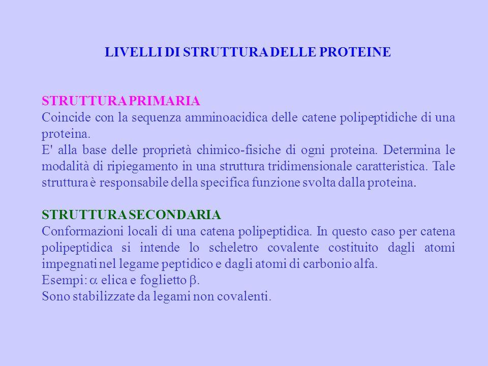 LIVELLI DI STRUTTURA DELLE PROTEINE