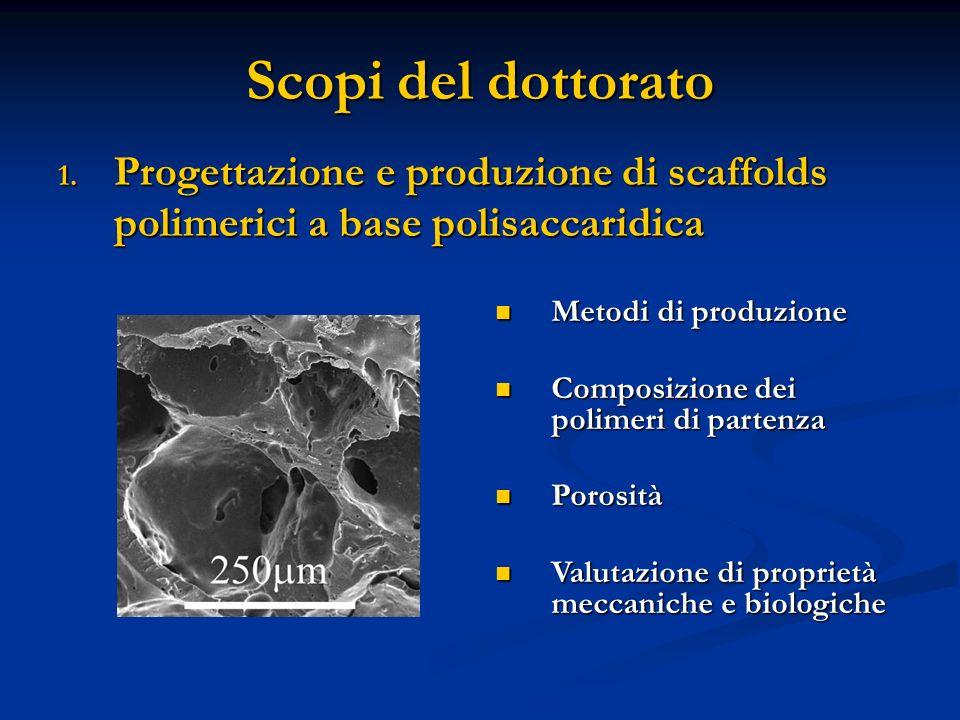 Scopi del dottorato Progettazione e produzione di scaffolds polimerici a base polisaccaridica. Metodi di produzione.