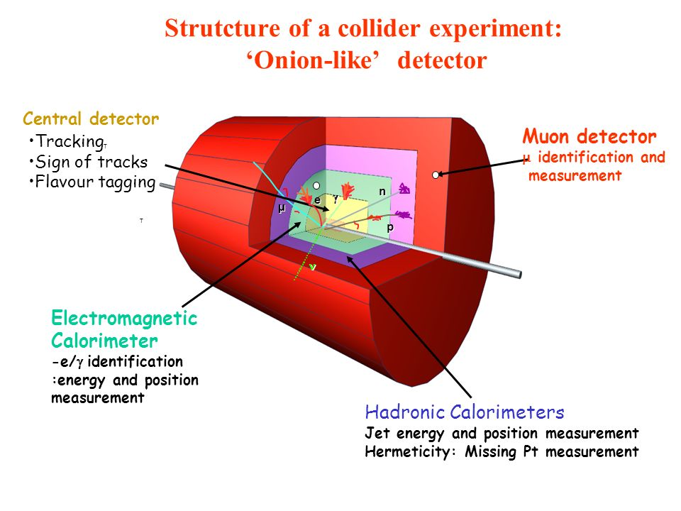 Strutcture of a collider experiment: 'Onion-like' detector