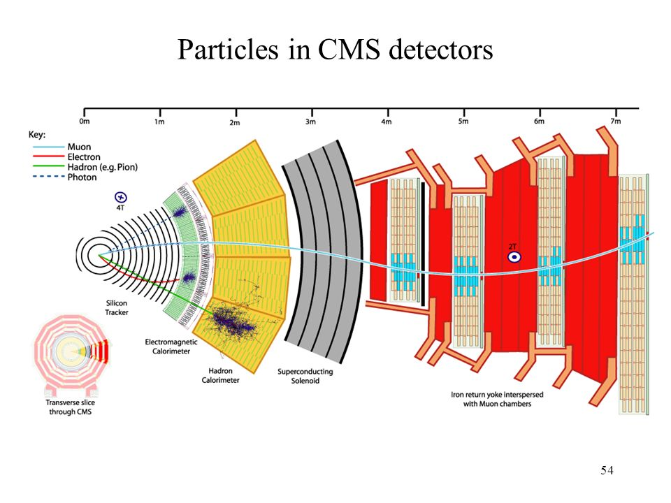 Particles in CMS detectors