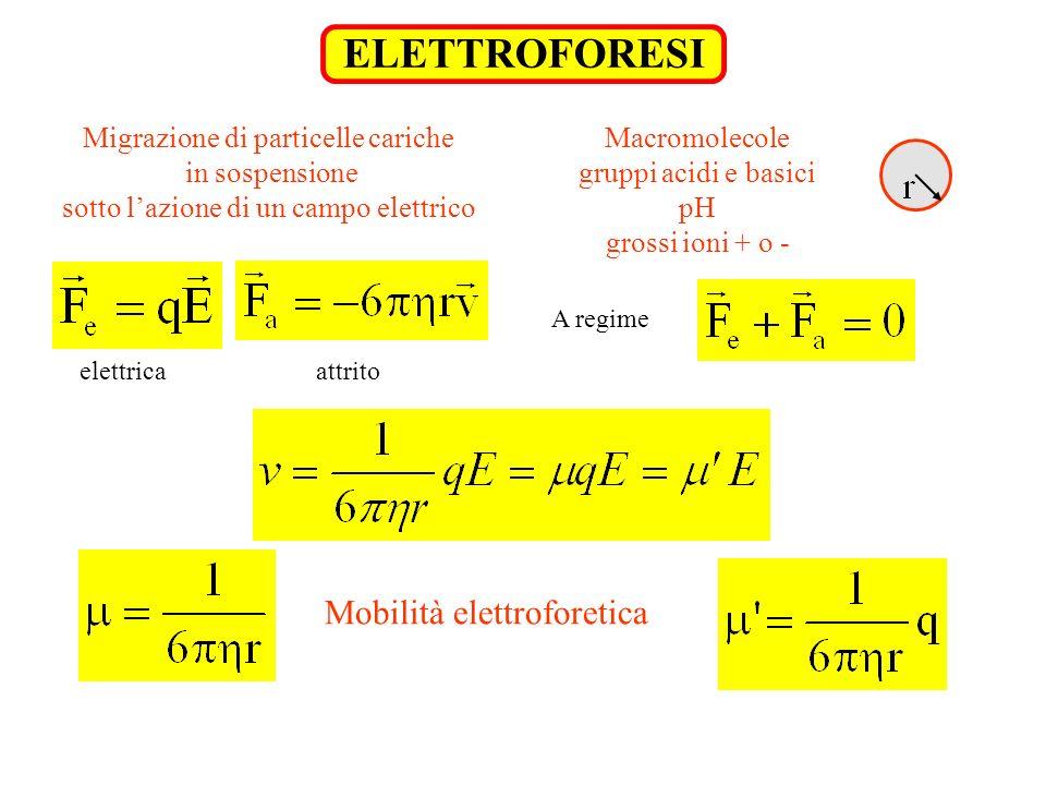 ELETTROFORESI Mobilità elettroforetica