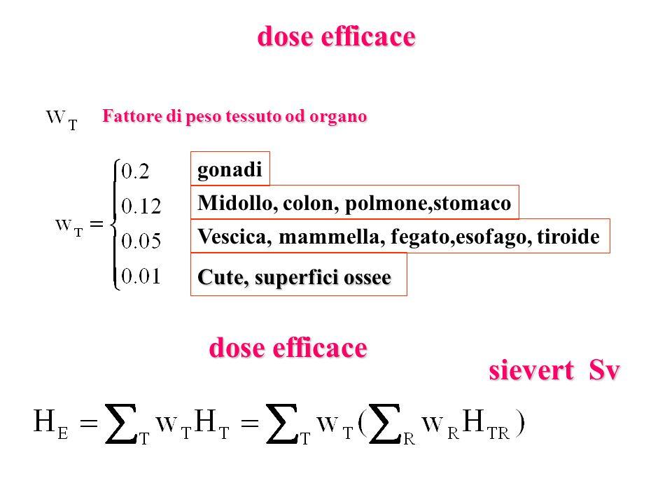 dose efficace dose efficace sievert Sv gonadi