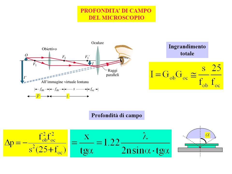 PROFONDITA' DI CAMPO DEL MICROSCOPIO Ingrandimento totale Profondità di campo