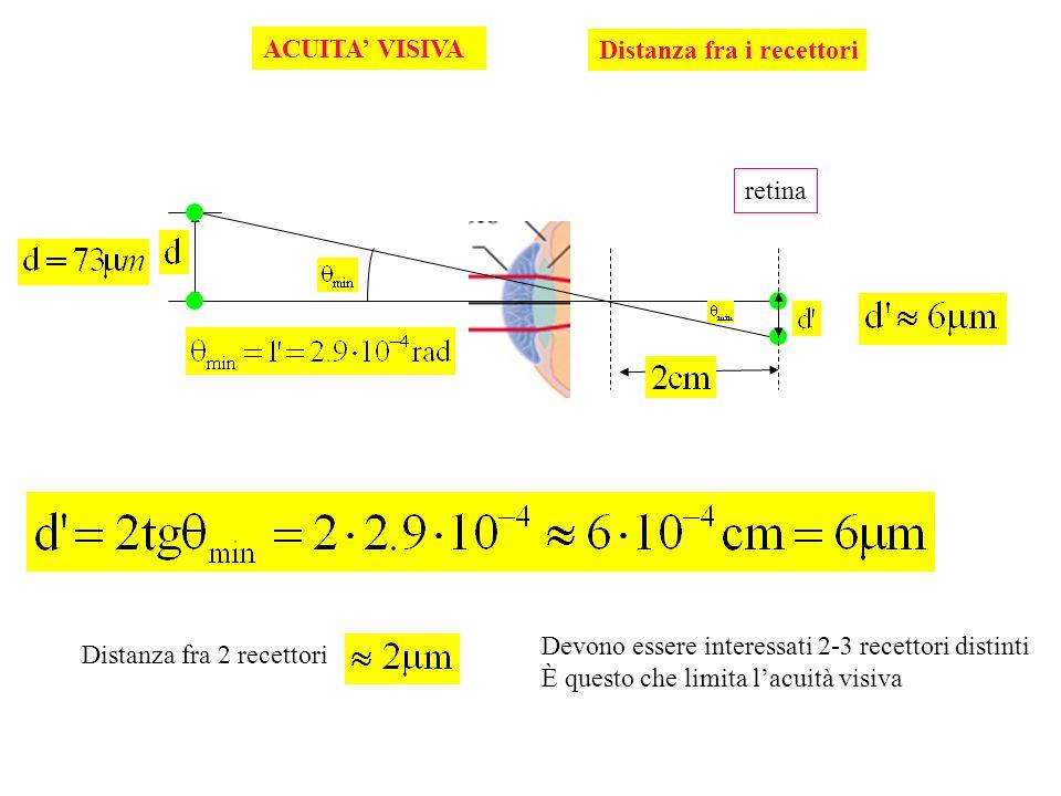 ACUITA' VISIVA Distanza fra i recettori. retina. Devono essere interessati 2-3 recettori distinti.