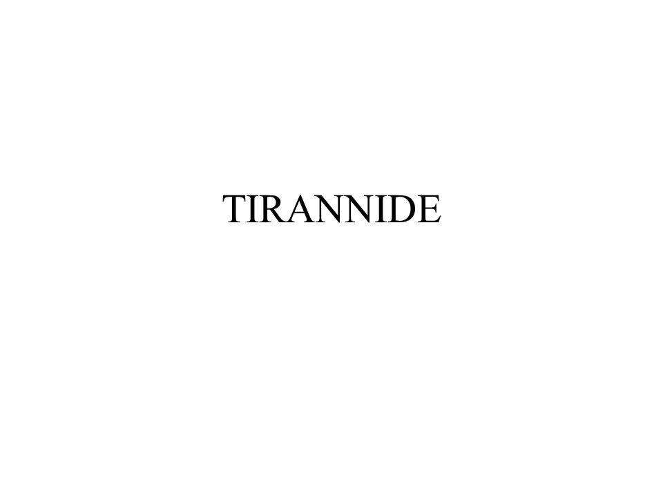 TIRANNIDE