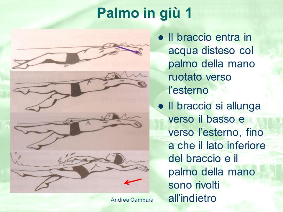 Palmo in giù 1 Il braccio entra in acqua disteso col palmo della mano ruotato verso l'esterno.