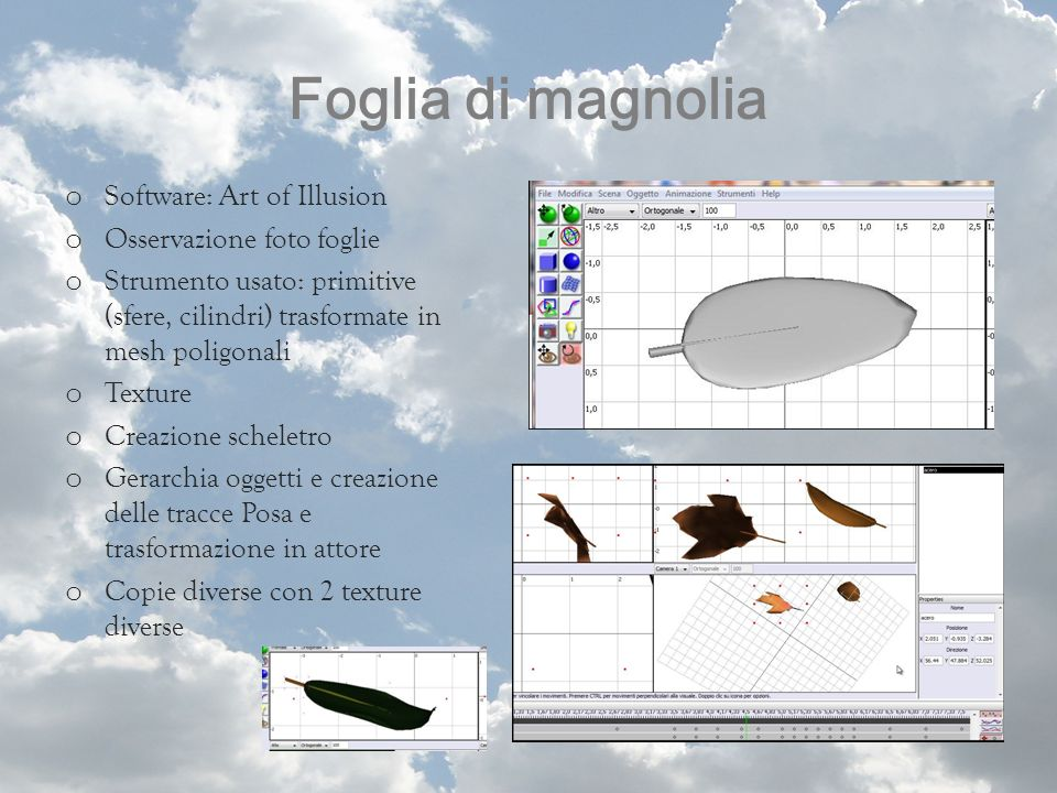 Foglia di magnolia Software: Art of Illusion Osservazione foto foglie