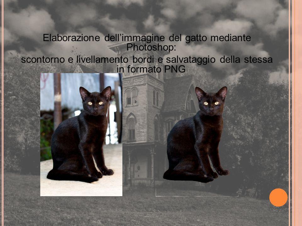 Elaborazione dell'immagine del gatto mediante Photoshop: scontorno e livellamento bordi e salvataggio della stessa in formato PNG