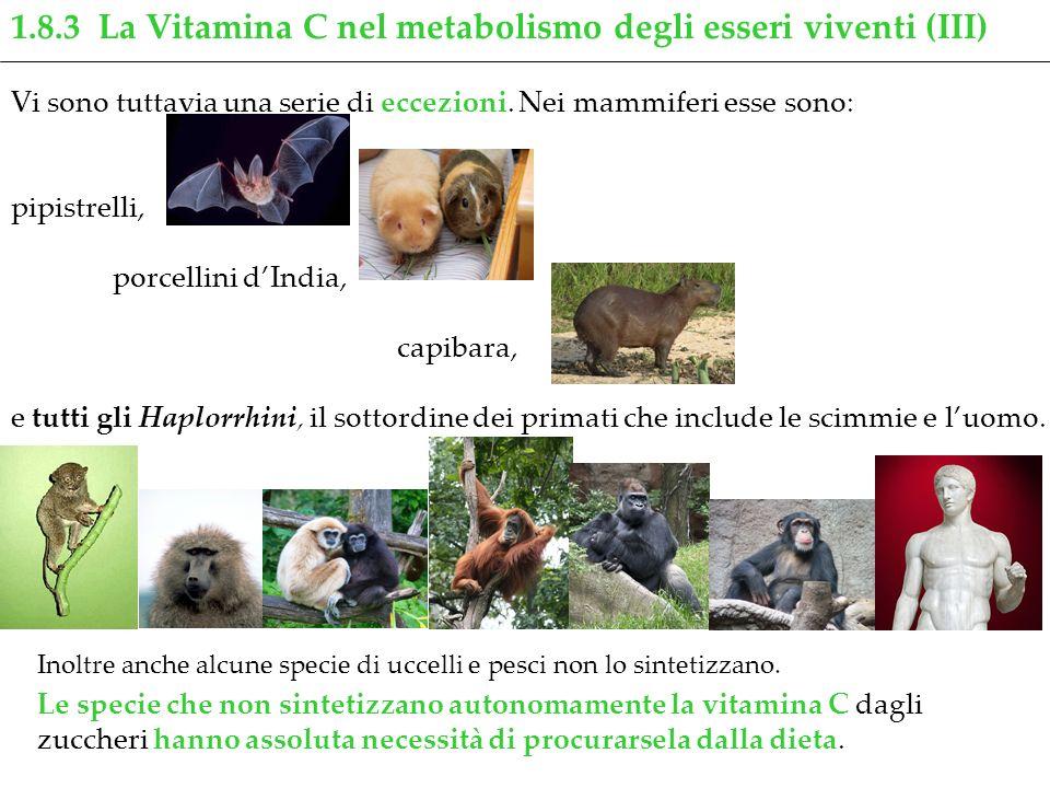 1.8.3 La Vitamina C nel metabolismo degli esseri viventi (III)