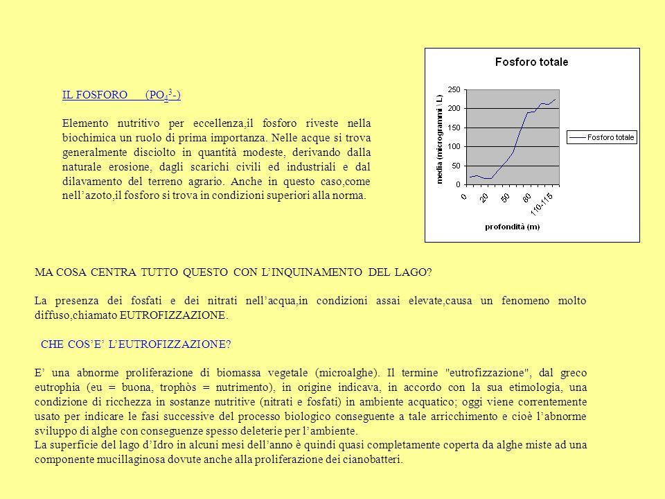IL FOSFORO (PO43-)