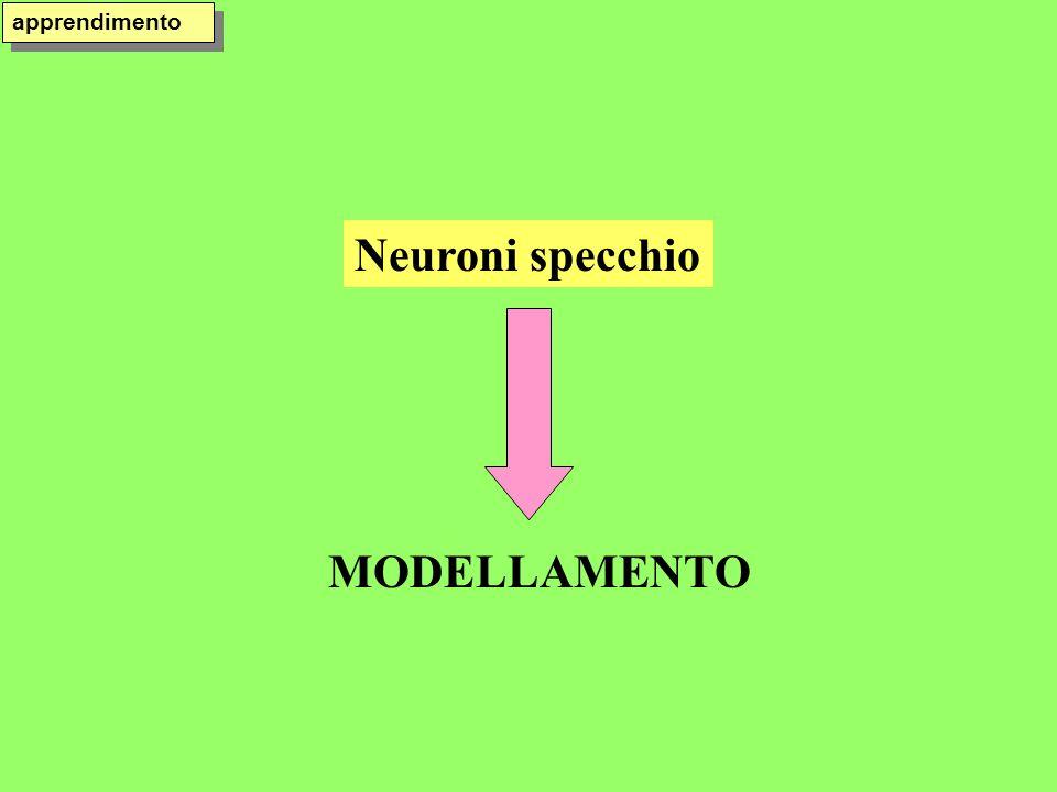apprendimento Neuroni specchio MODELLAMENTO
