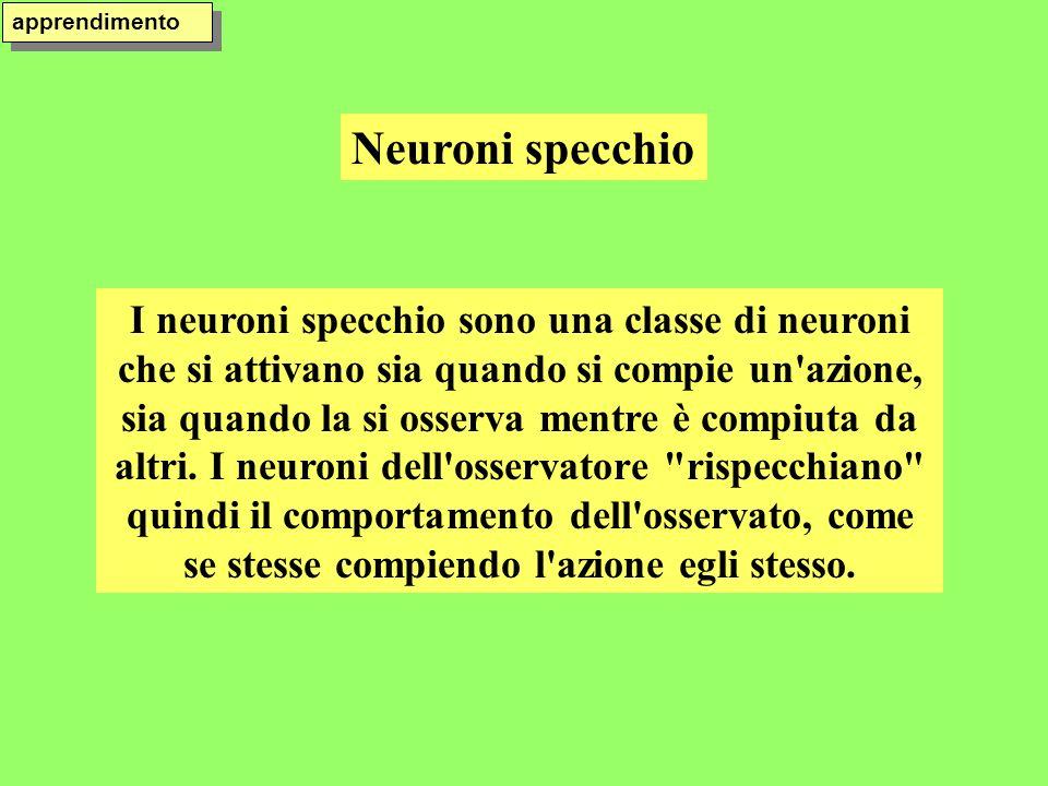 apprendimento Neuroni specchio.