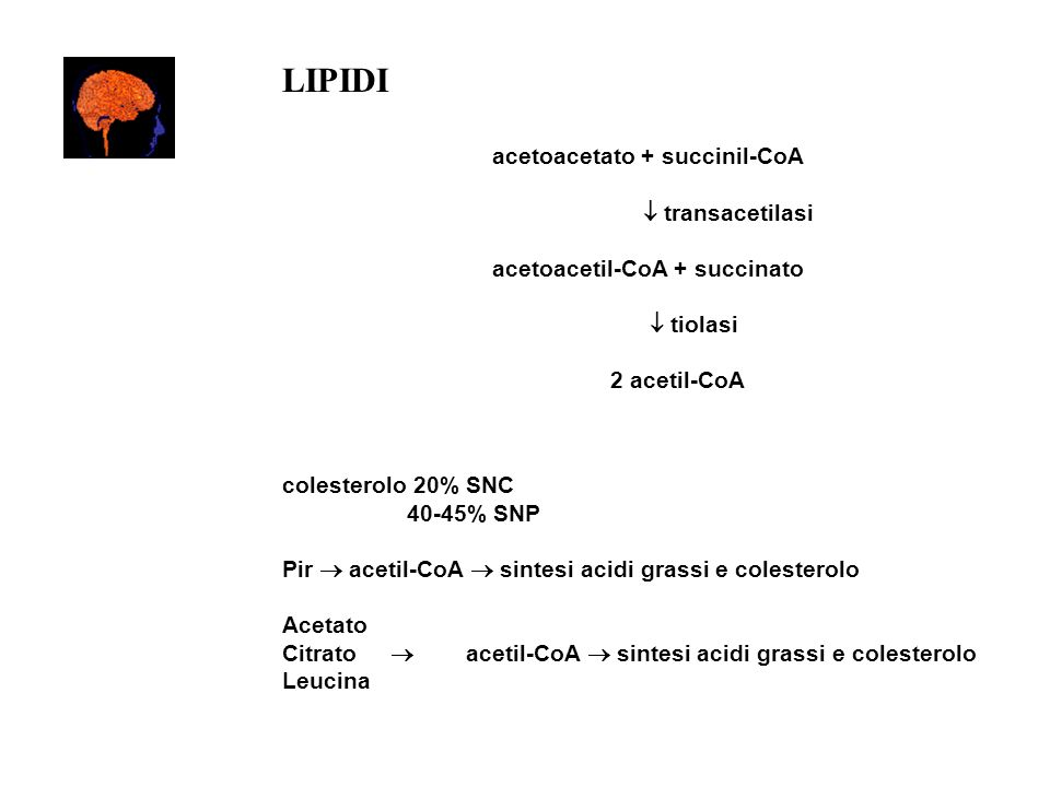 LIPIDI acetoacetato + succinil-CoA  transacetilasi