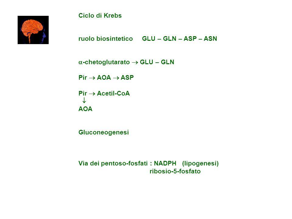 Ciclo di Krebs ruolo biosintetico GLU – GLN – ASP – ASN. -chetoglutarato  GLU – GLN. Pir  AOA  ASP.