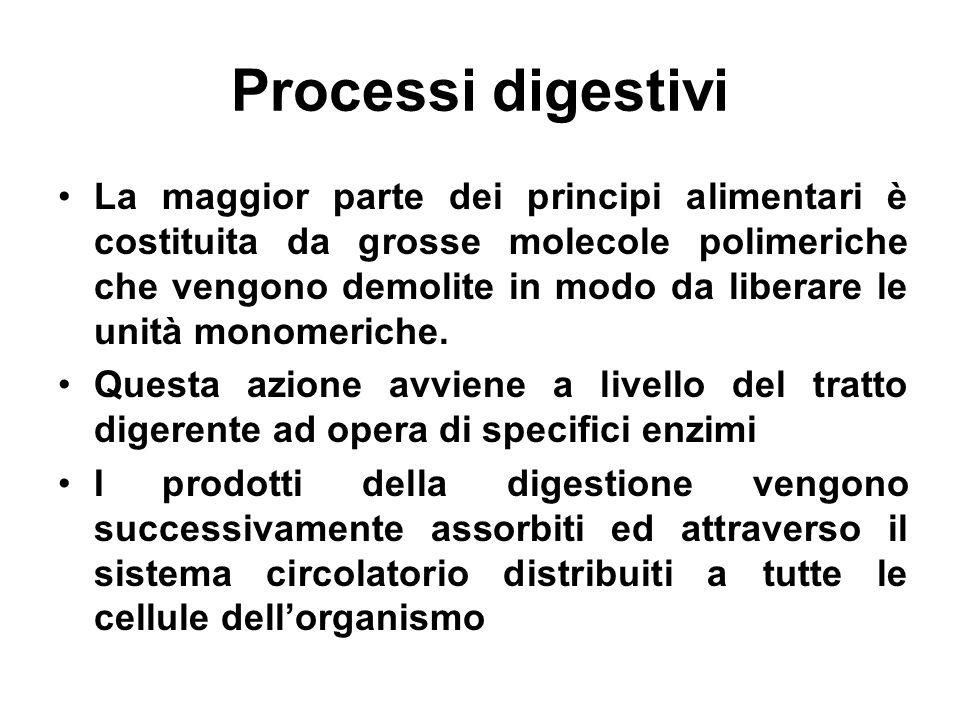 Processi digestivi