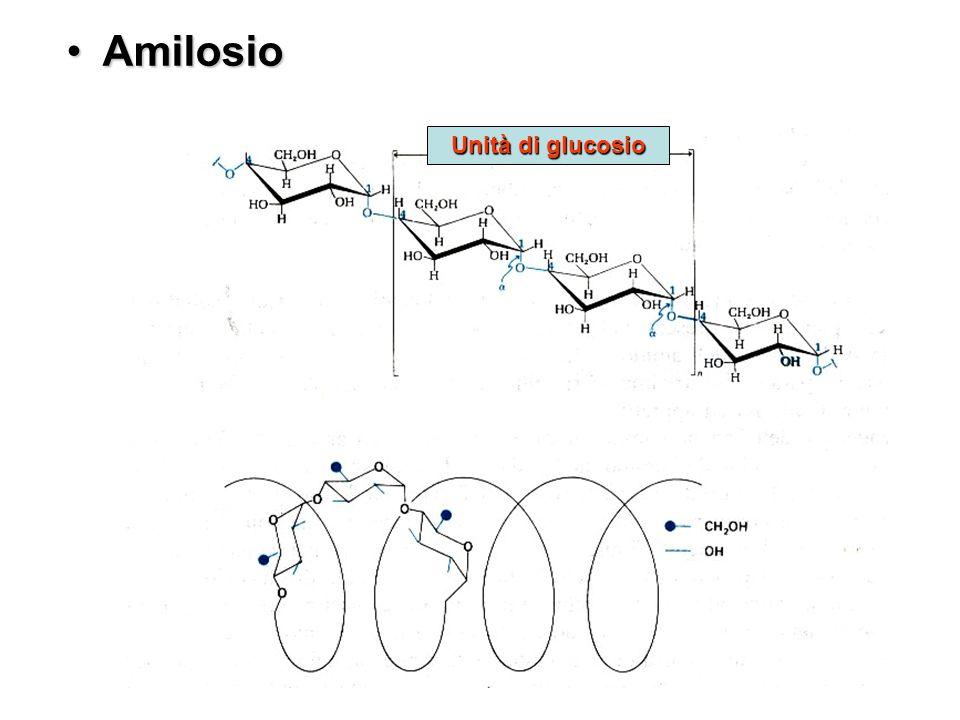 Amilosio Unità di glucosio