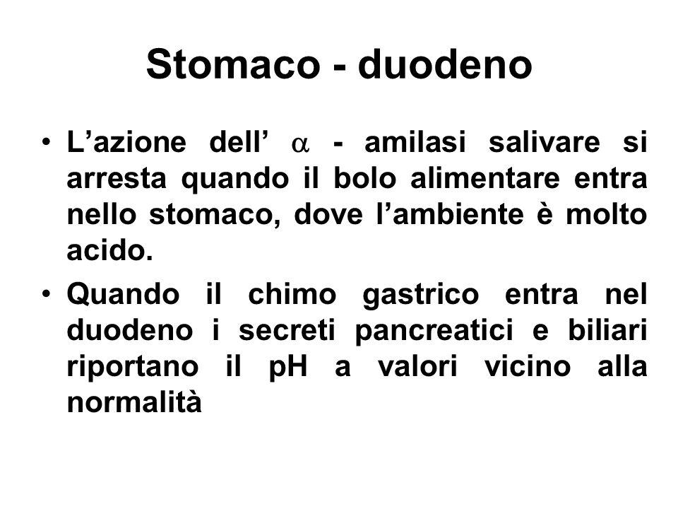 Stomaco - duodeno L'azione dell'  - amilasi salivare si arresta quando il bolo alimentare entra nello stomaco, dove l'ambiente è molto acido.