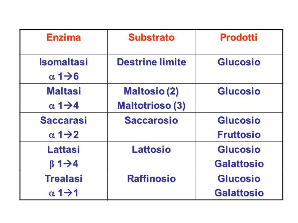 Enzima Substrato. Prodotti. Isomaltasi.  16. Destrine limite. Glucosio. Maltasi.  14. Maltosio (2)