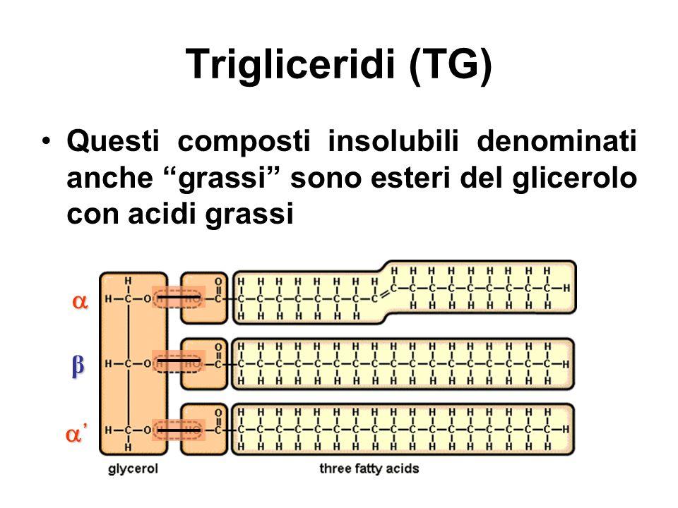 Trigliceridi (TG) Questi composti insolubili denominati anche grassi sono esteri del glicerolo con acidi grassi.