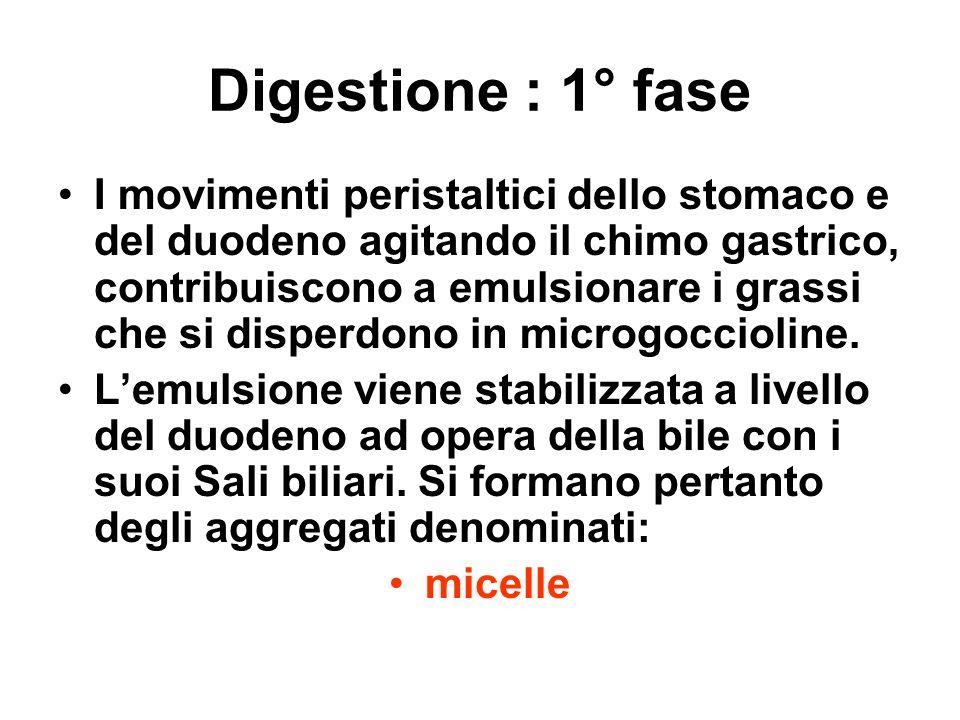 Digestione : 1° fase