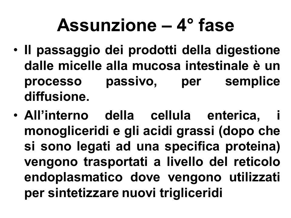 Assunzione – 4° fase Il passaggio dei prodotti della digestione dalle micelle alla mucosa intestinale è un processo passivo, per semplice diffusione.